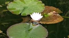 モネの池ソロTRG