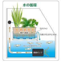 植物と熱帯魚