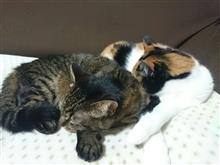 ネコは寝子…