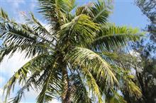 Guam 二日目
