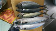 おさかなフェスタ南伊勢【🐟】魚を食べに行ってきました