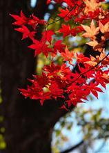 秋のドライブ旅行2日目
