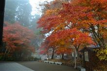 平泉リベンジで今年の紅葉撮影終了