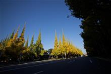 都心部の銀杏も大分黄色くなってきました。