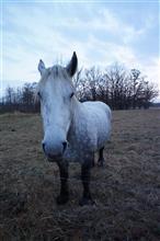 私の駿馬。