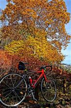 自転車で近場の紅葉観察してみよう(青梅編)