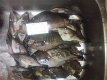 絶好の釣り日和…