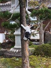 木登りするネコちゃん