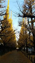 上から下まで金色に輝く遊歩道☆