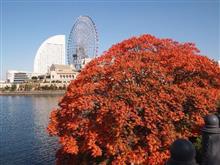 ヨコハマ秋景色