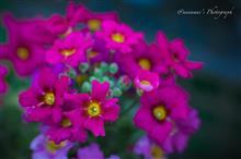 秋深い花たち