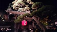 夜の長谷寺
