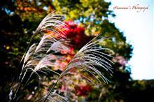 鮮やかだった昭和記念公園の紅葉🍁