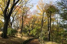 雑木林っぽい公園