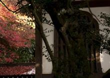 静寂の広園寺