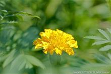 夏の花と昆虫、自宅の庭にて