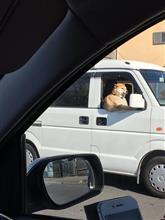 柴犬みたいなおっさんが車運転してた