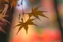 *秋色さんぽ⑦*   ~甲州市松里・ころ柿の里~