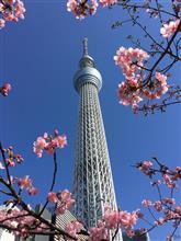 東京スカイツリーと梅