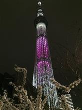 東京スカイツリーと夜桜!