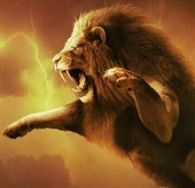 ライオン狩り(≡・ェ・≡)