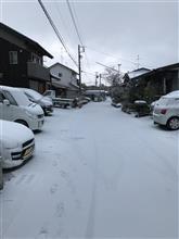 今日も雪が❄️