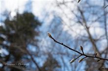 LEICA Qで切り取る冬の神代植物公園(寒)