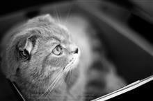 Cats & Camera bag & True colors
