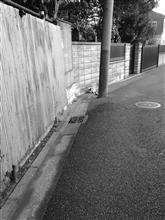猫遭遇あり(2017.1.30/朝)
