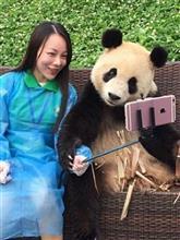 美人と「自撮り」を楽しむパンダが話題に