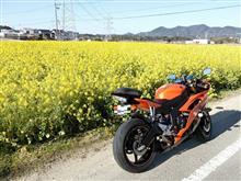 菜の花 海 山!!