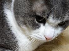 動物病院行くのはたいへん💦(猫ブログ)