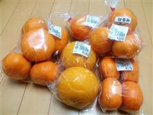 柑橘買い出しドライブ