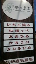 静岡イチゴ狩りTRG NO2