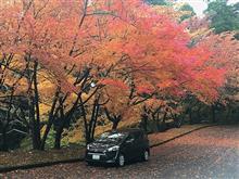 秋にちょいと別府ツアー2016~その7