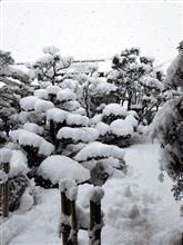 また雪降ってる…(´・ω・`)