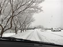 雪道通勤 中々やるなキャロル