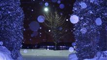 ◆雪 降ってきた◆