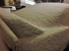 雪降ってきました
