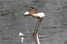 この冬の松尾池