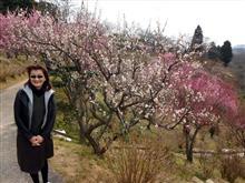 梅の花と今日のランチ。