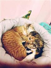 パパ猫がママ猫と子猫たちを見守っている写真。こ、これは癒しだぞ