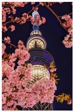 東京でスカイツリーです!