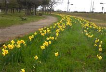 春らしい日(^o^)b