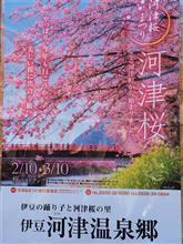 関東伊豆方面一番桜河津桜の言われ!