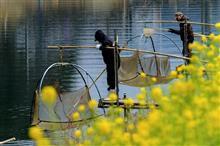 佐々川でシロウオ漁ですよ!