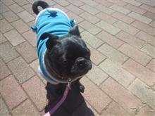 今日は暖かいからお散歩です!