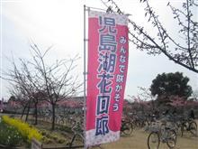 河津桜と、かき氷と、カチコチ