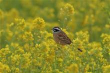 WSへ今季最後の鳥撮りは、大撃沈 ・・・ (^_^;)