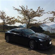 笠戸島の河津桜と菜の花